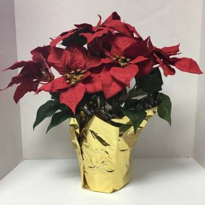 silk poinsettias red