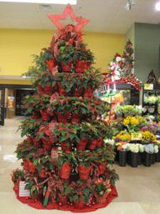supermarket potted plant tree display