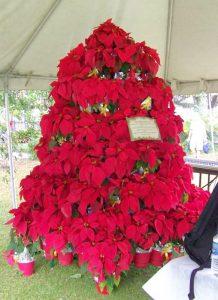 decorative tree dislay