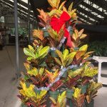 croton display