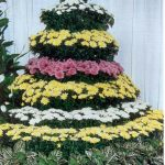 mum tree display