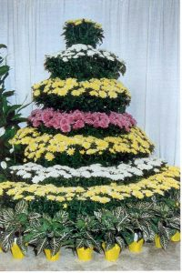 mum tree display