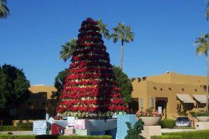tree at resort