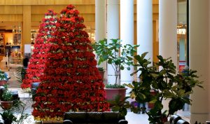 holiday flower display for stores