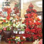retail potted plant displays