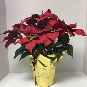 red silk poinsettias