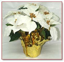 white silk poinsettias