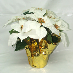 white silk poinsettias
