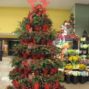 pretty plant displays