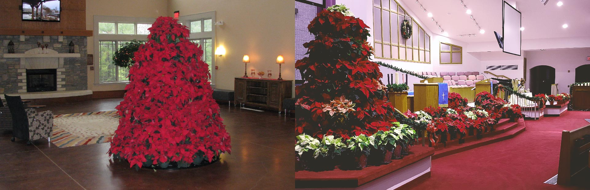 poinsettia tree displays