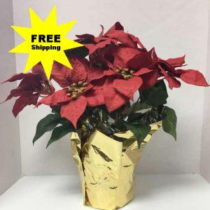 free shipping silk plants